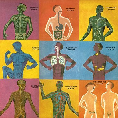 body-systems-chard