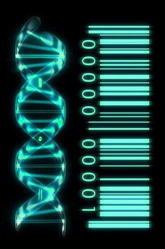 2-Biophotonics-the-Science-behind-Energy-Healing-DNA-as-Genetic-Barcode