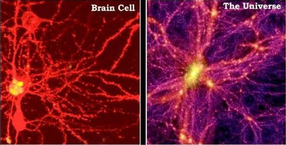 universe-and-brain-cells