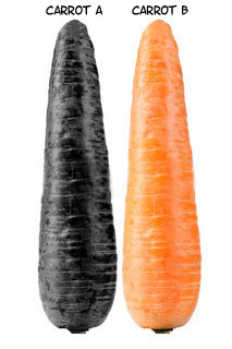 organic-carrot-vs-commercial-carrot