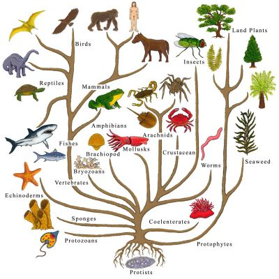evolutionary_tree_of_life